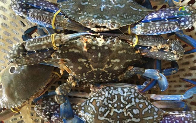 Hướng dẫn chọn mua hải sản tươi sống khi du lịch biển Hải Tiến 4