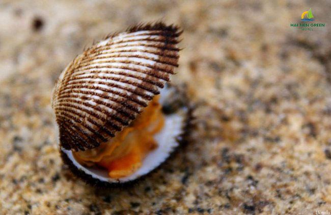 Hướng dẫn chọn mua hải sản tươi sống khi du lịch biển Hải Tiến 5